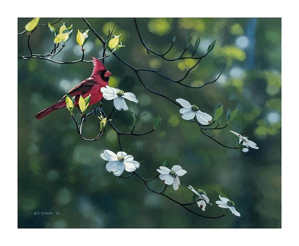Cardinal and Dogwood - Terry Isaac