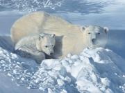 Arctic Home - Terry Isaac