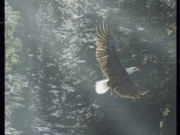 Eagle Falls - Terry Isaac