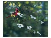 Cardinal and Dogwood - Terry Isaac
