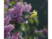 Goldfinch and Lilac - Terry Isaac