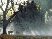 Yosemite Dawn - Terry Isaac