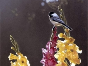 Chickadee and Gladiolas, by Terry Isaac