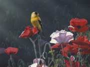 Finch and Poppies, by Terry Isaac