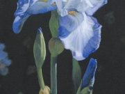 Iris Portrait by Terry Isaac