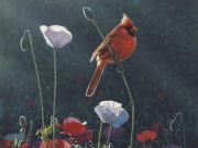 Cardinal and Poppies, by Terry Isaac