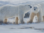 Polar Bears by Terry Isaac