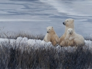 Polar Bear Trio by Terry Isaac