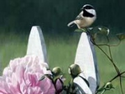 Chickadee and Peonies