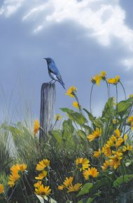 Bluebird and Balsamroot