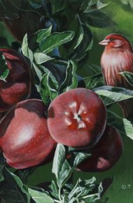 Red Finch and Apples