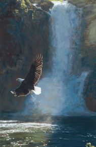 Wings Over Water – Eagle