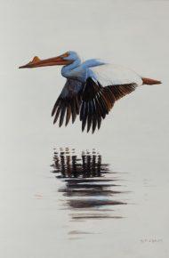 A Wonderful Bird is the Pelican