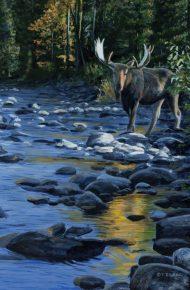 Manning Park Moose