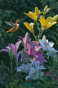Rufous with Lilies