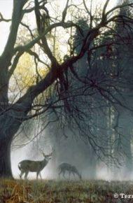 Yosemite Dawn