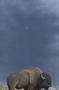 Bison and Moon