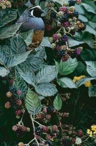 Brambles and Brass Buttons