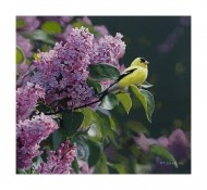 Goldfinch and Lilac