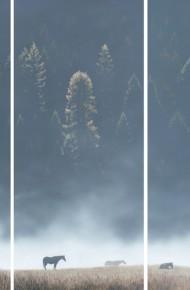 Field of Dreams (Triptych)